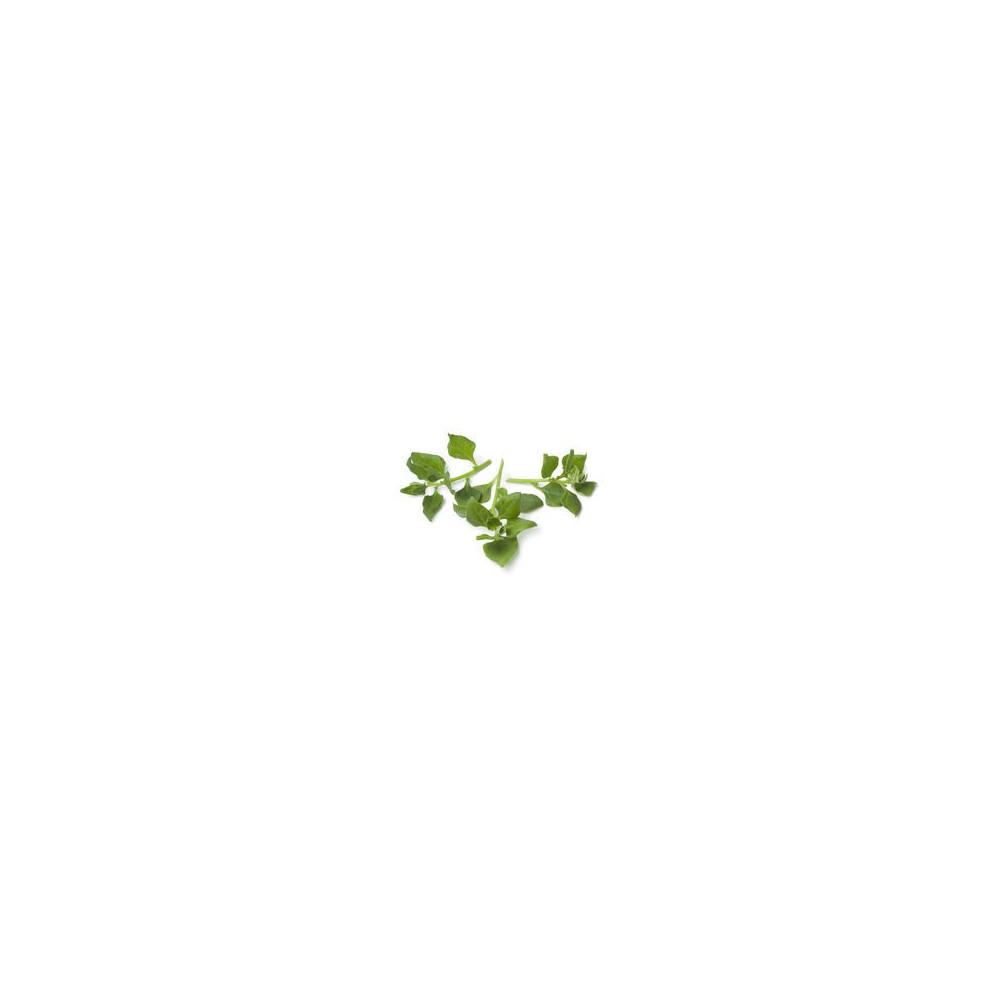 Espinaca Nueva Zelanda (HOJAS) x paquete